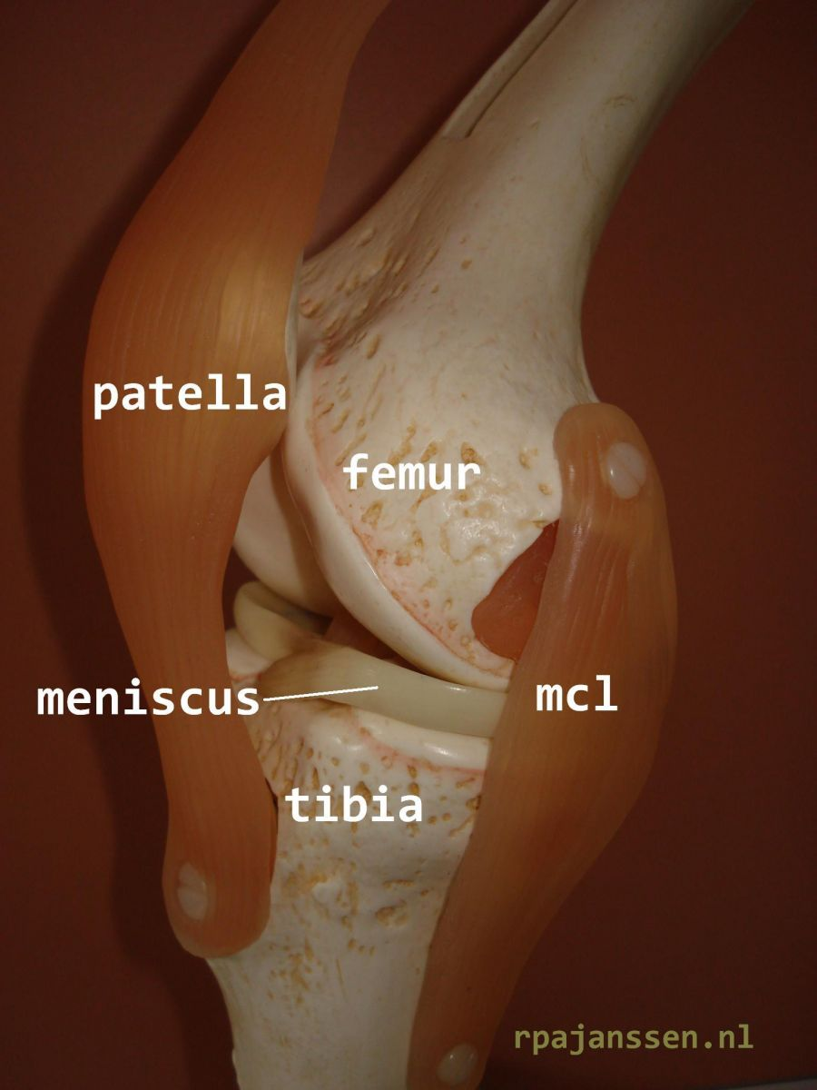 Side view knee